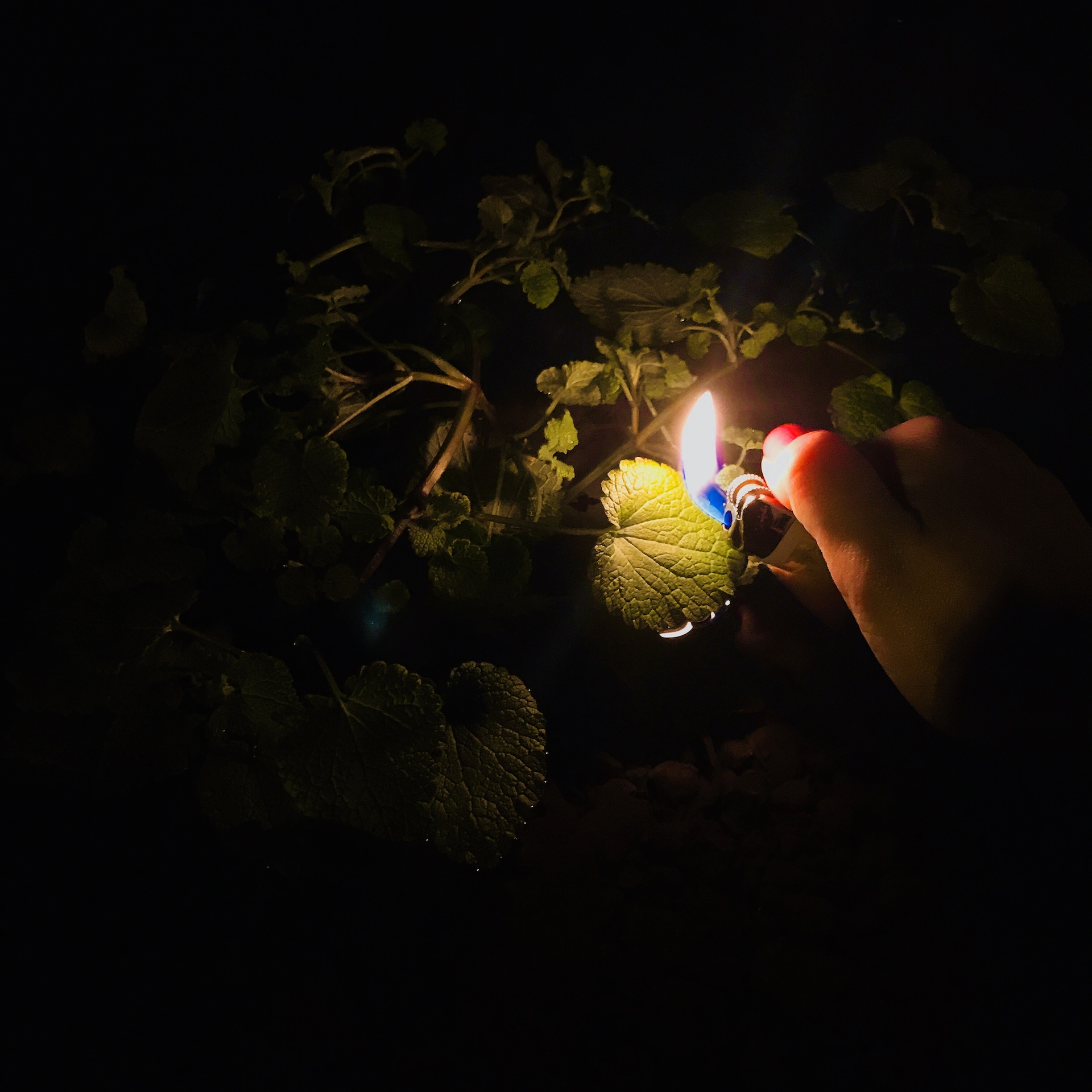 A lit lighter illuminating leaves