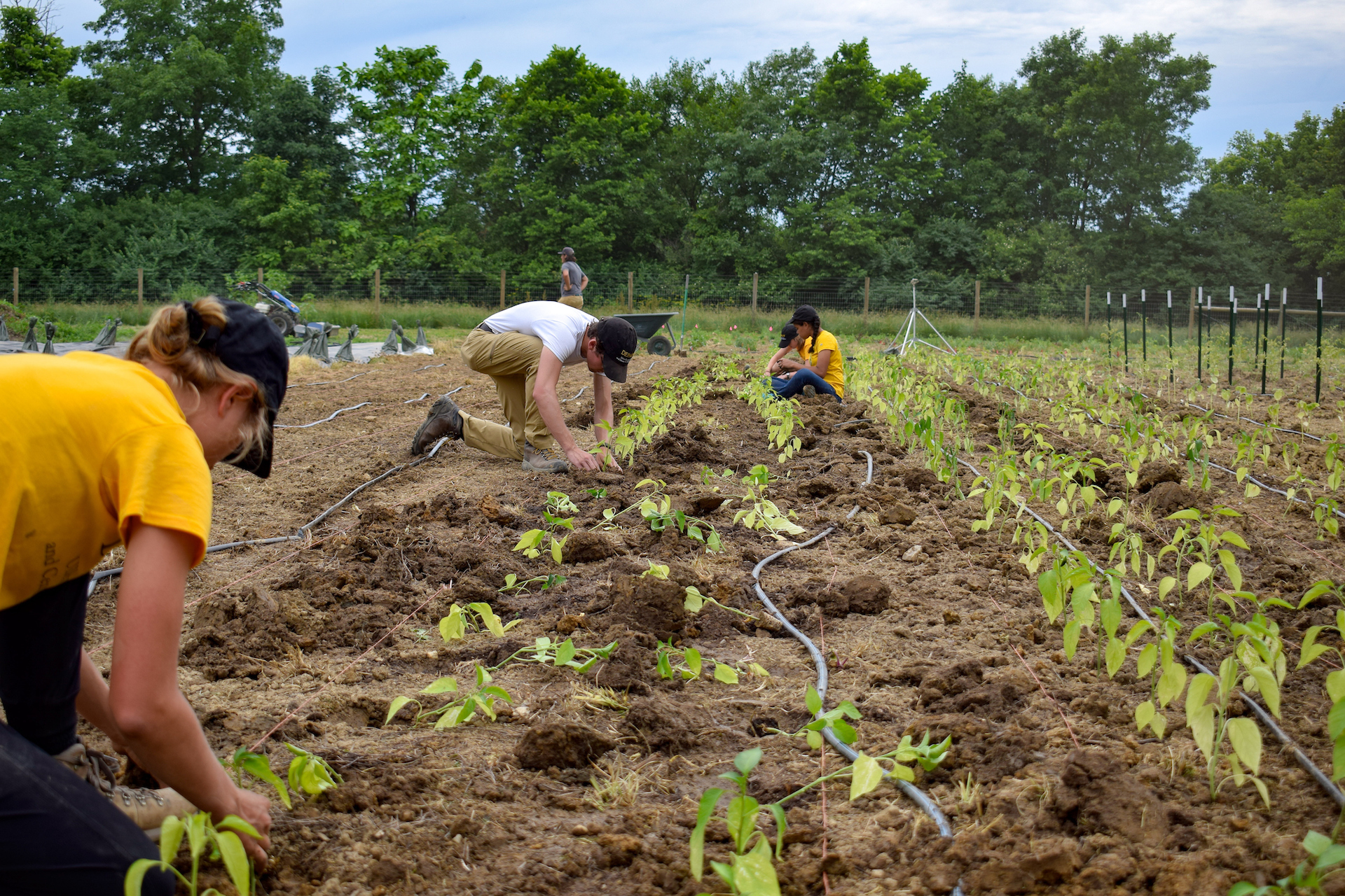 Students digging in the dirt at the Campus Farm
