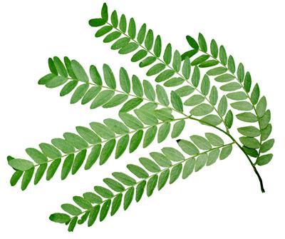 Nature Park Plants Depauw University