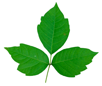 thumb_poison-ivy-2.jpg