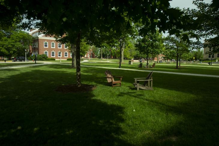 Leafy campus with shadows
