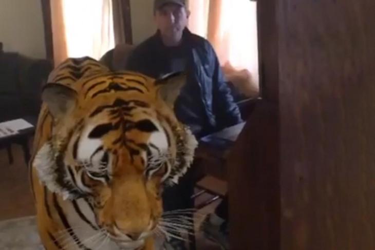 Joe Heithaus with a digital tiger