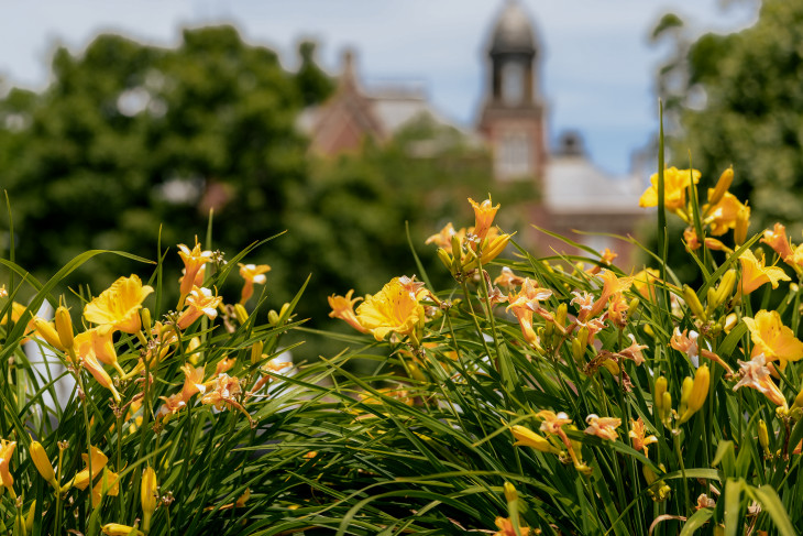 Yellow lilies in the foreground, East College in background