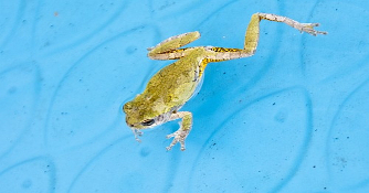 Parachuting Frogs