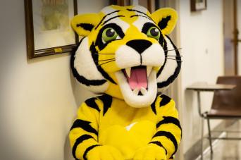 Tiger Insights