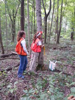 Measuring a tree