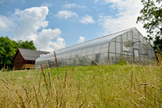 Ullem Farm greenhouse