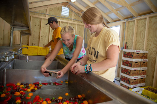 Students washing vegetables after being picked in the fields of the Ullem Campus Farm