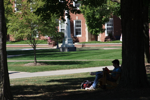Student studying under a tree on campus
