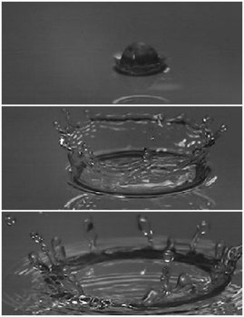 Splash Corona
