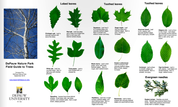 Nature park tree identification pamphlet