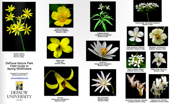 Nature park spring wildflower pamphlet