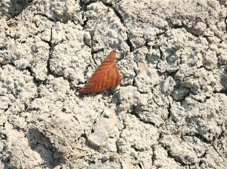 Leaf on rock -- Photography by Cynthia O'Dell