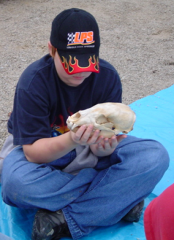 Grade school student examining an animal skull