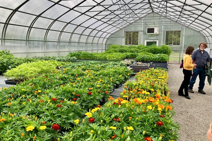 Inside the Ullem Center greenhouse