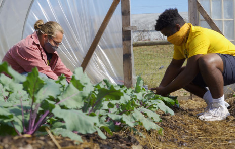Students harvest vegetables at the Campus Farm
