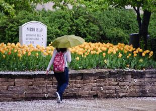 The rain isn't fun, but I'm loving the flowers.